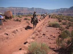 Mule crossing in the Grand Canyon