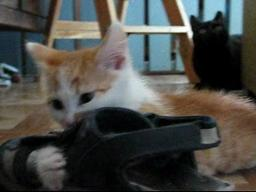 Shoe Killing Kitten