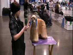 Rose City Classic dog show