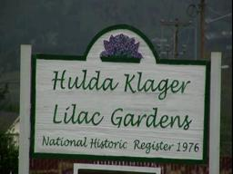 A video visit to Hulda Klager Lilac Garden plus tips for revitalizing lilac trees