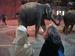 Circus elephants walk through downtown Cleveland