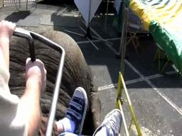 Aboard an elephant at the Big E