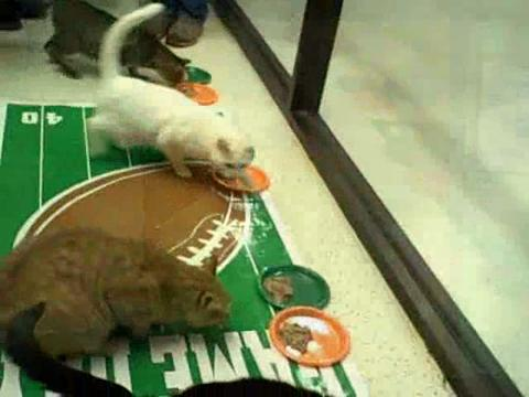 Cats predict Oregon Ducks will win BCS title game