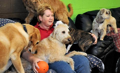 Canines Unleashed, a daycare for dogs.
