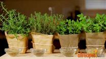 All about Italian Herbs
