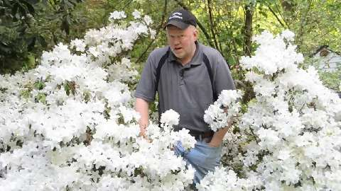 Digging with Doug: Awesome azaelas, heavenly hanging plants