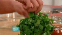 Picking fresh coriander