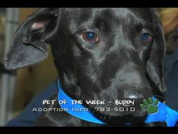 St. Charles Parish Pets of the Week for December 11, 2009