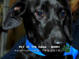 St. Charles Parish Pets of the Week for December 4, 2009