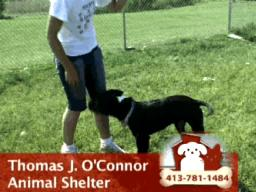 Adopt a dog from Thomas J, O'Connor Animal Shelter