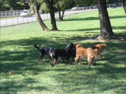 Dog Park Fun In York PA With Otis 9-19-09