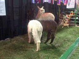 Farm Show animals