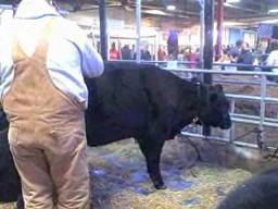 Cleaning up at the Pennsylvania State Farm Show