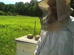 Tom Dominick of Goodrich talks about beekeeping