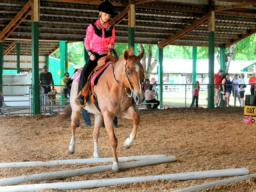 Argus Community Album:  4-H Horse Fair