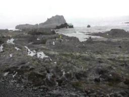 A minus three-foot tide at Yaquina Head