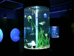Oddwater has beautiful fish swimming through beautiful glass