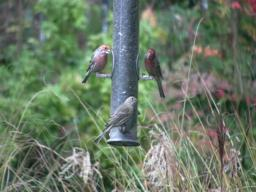 Suet for the birds