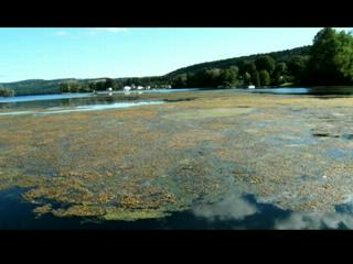 Skaneateles Lake Eurasian Milfoil Eradication Program