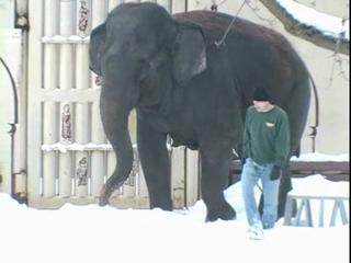 Elephant in the snow