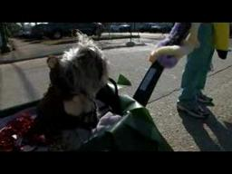 VIDEO: Krewe de Paws