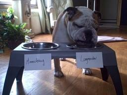Spike the Bulldog makes his weekly football prediction -- times two.