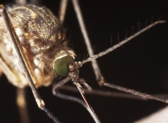 Safer Insect Repellents That Work