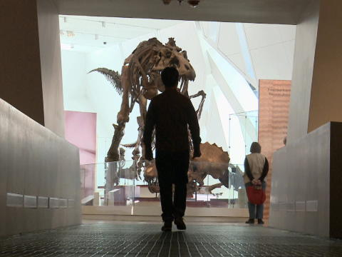 Museum Diaries - Ep. 4 - Dinos ReDiscovered