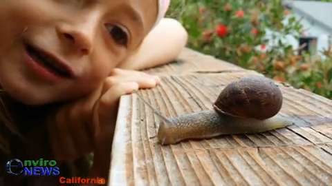 EnviroKids: Shelly the Snail — What she's been doing in your garden