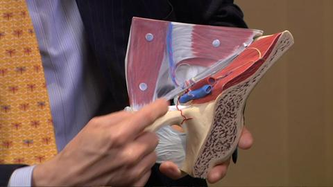 Anatomy Review for Laparoscopic Inguinal Hernia Repair