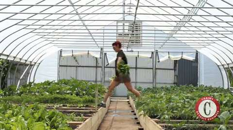 RecoveryPark greenhouse grows expansion plan as well as produce