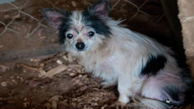 NC Puppy Mill Rescue B-roll