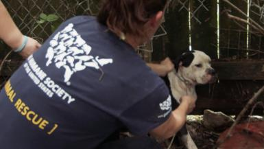 Louisiana Flooding - Animal Rescue Team b-roll