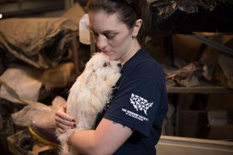 NC puppy mill rescue broll