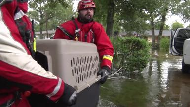 Hurricane Harvey: Animal Rescue Team rescues animals from flooding