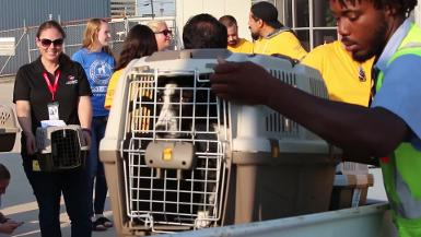B-roll of shelter animal transport in aftermath of Hurricane Harvey
