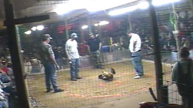 Kentucky Cockfighting B-roll