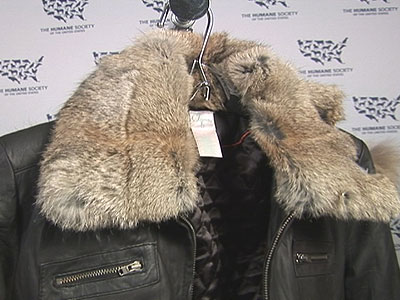 Faux Fur Shoppers Beware B-roll