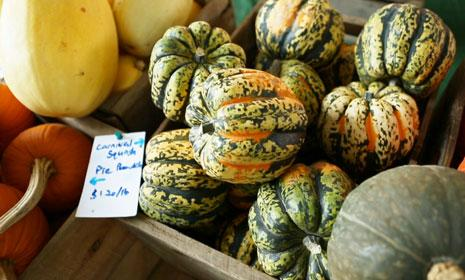 Watch: How to Select and Cook Winter Squash