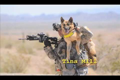 Combat Dogs Book New Book Honors 'soldier Dogs'