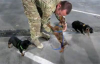 Dogs Greet Dad After Deployment!