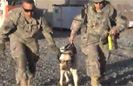 PTSD Dog Boards Heli to Afghanistan