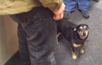 Reunited Dachshund Goes Berserk