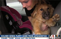 Soldier Sends Afghan Dog to Family