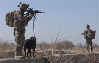 Tactical Explosive Detection Dog