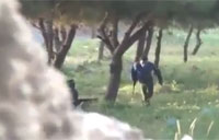 SAA Defector Runs for Rebel Lines