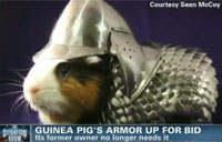 Guinea Pig Armor Up for Sale
