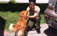 Golden Retriever Reunites with Sailor