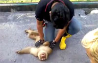 Paramedics Save a Monkey's Life