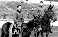 The Story of the Famous Army Mules